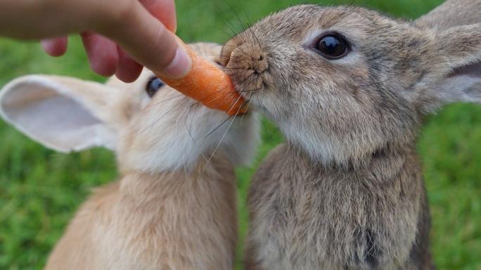 rabbit-2505034_960_720.jpg